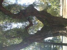 a heart tree! I Love Heart, Happy Heart, Enchanted Tree, Heart In Nature, Heart Tree, Unique Trees, Tree Art, Amazing Nature, Belle Photo