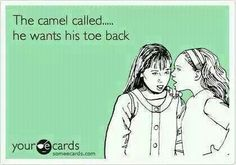 The camel called....
