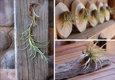 Plantology: Air Plants as Art
