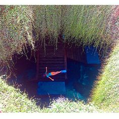 """""""What a place! Devils Den Springs. Williston, Florida. Photo by @hdawnn"""""""