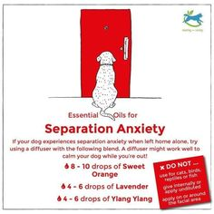 Essential Oils for separation anxiety in dogs :) Great for long days at work. Dog Separation Anxiety, Dog Anxiety, Anxiety Tips, Anxiety Help, Anxiety Relief, Stress Relief, Essential Oils Dogs, Essential Oil Uses, Young Living Oils