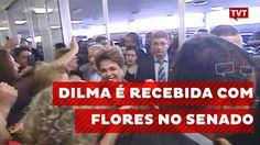 Dilma é recebida com flores no senado