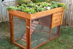 want the chicken coop roof to be flat like this with a garden to grow treats for chickens