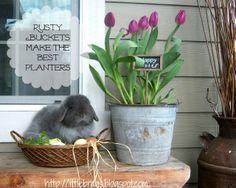Rusty bucket with tulips