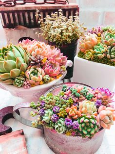 Growing Greens, Growing Succulents, Succulents In Containers, Cacti And Succulents, Planting Succulents, Cactus Plants, Planting Flowers, Succulent Gardening, Container Gardening