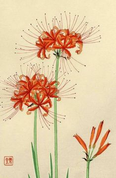 Red Spider Flower Kawarazaki Shodo 1954