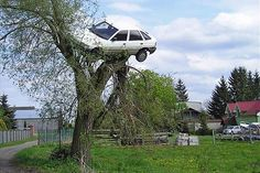 whomping willow! Ron is car in a tree again? haha!