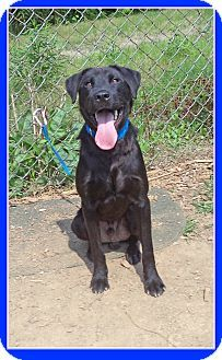 Act quickly to adopt PRINCETON. Pets at this shelter may be held for only a short time.