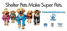 Shelter Pet Project