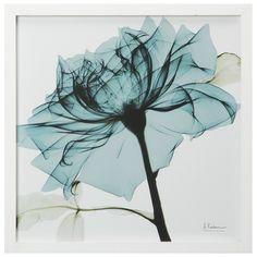 Viola COLIBRI /'acquerello stampa da R NOLAN