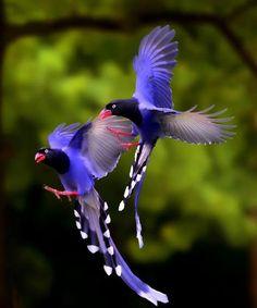 Perfect Flight of Pretty Birds