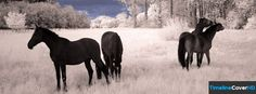 Horses In Winter Timeline Cover 850x315 Facebook Covers - Timeline Cover HD