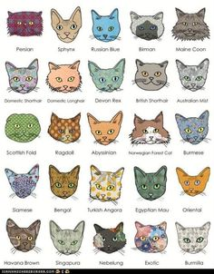 An Illustrated Guide to Cat Breeds