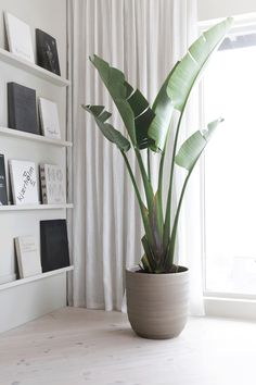 Maybe it´s because of all the snow we still have outside, but I suddenly felt the urge to buy some new plants for our home. One of them is this big &quo...