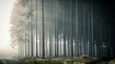 """Du hast die Wahl, den rechten oder den linken Weg nehmen, ins Licht oder ins Dunkle,... Bild ist aus der Foto-Serie """"Nebel im Schwarzwald"""", der Artikel mit Tipps wird kommende Woche fertig, Foto-Tipps auf: www.tobiasackermann.eu ISO100 24mm f8 1/100   #tobiasackermann    #schwarzwald    #landschaftsfotografie    #nebel    #fototipps"""