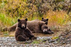 Photo FamilyBears by Abe Blair on 500px