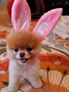 cutesy dog stuff.
