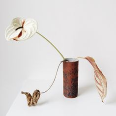 Anthurium, spathiphyllum and calathea in vintage pottery. Fall.