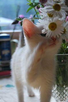 flowers Kittens, Cats, Corgi, Romance, Flowers, Animals, Cute Kittens, Romance Film, Gatos