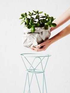 Ivy Muse: unos pedestales atemporales : Fresh