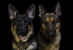 Spilltojill: Photos of pets and animals