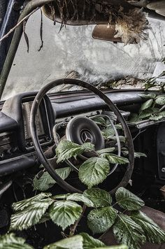 #Mercedes slipping into #Nature. #RustinPeace #Beauty #Dashboard #Interior