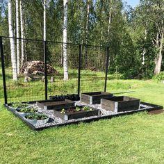Backyard Vegetable Gardens, Veg Garden, Vegetable Garden Design, Garden Oasis, Garden Pots, Outdoor Gardens, Garden Yard Ideas, Garden Projects, Urban Agriculture