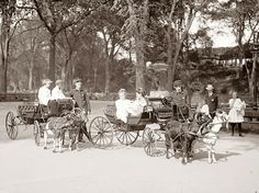 The picture above was taken in 1904, and shows children in Goat Carriages in Central Park, in New York City. #goatvet loves these 4 wheelers