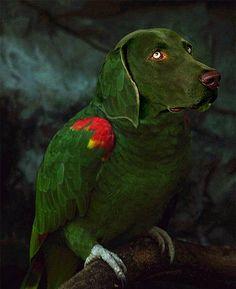Red & green bird dog