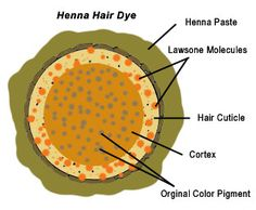 henna hair dye- natural hair color and facts about how to naturally change hair color
