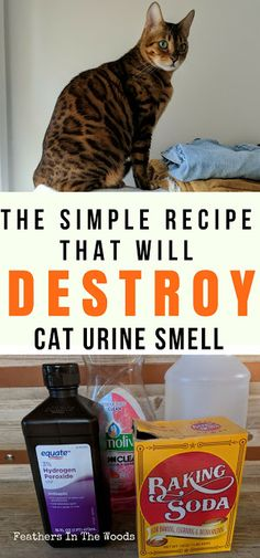 cat pee smell permanently Homemade cat odor remover spray that works every time. Better then store bought sprays and more natural!Homemade cat odor remover spray that works every time. Better then store bought sprays and more natural! Remove Cat Urine Smell, Cat Pee Smell, Cat Urine Smells, Remove Stains, Deep Cleaning Tips, Cleaning Hacks, Cleaning Products, Pet Products, Cat Urine Remover