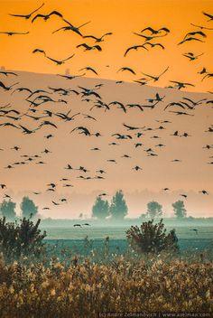 En el ocaso del día las aves se desplazan. Hermosa postal