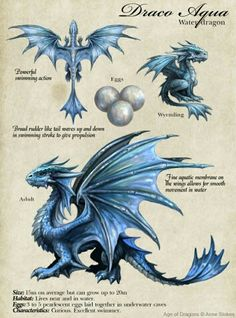 Draw Creatures Anne Stokes dragons are simply amazing! Water Dragon, Dragon Egg, Blue Dragon, Fantasy Wesen, Fantasy Art, Magical Creatures, Fantasy Creatures, Dragon Anatomy, Dragon Sketch