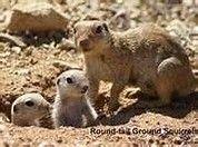 Image result for Taklamakan Desert Animals