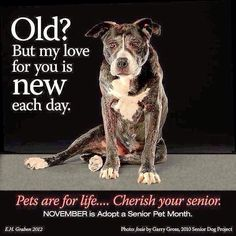 NOVEMBER is ADOPT a SENIOR month We have adopted 3 senior cats and a senior dog. They have all been absolutely wonderful! Martin Luther, I Love Dogs, Puppy Love, Animals And Pets, Cute Animals, Dog Rules, Old Dogs, Animal Quotes, Animal Rescue