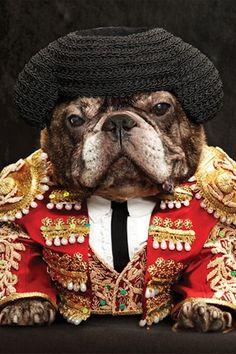 El Matador, Marcel The French Bulldog in costume