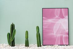 pastel board cactus frame green inspiration life motivation nature paper plant show lights photo mockup decor home decor copy space