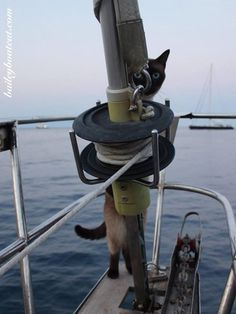 Q: Who's in charge on the boat? | Set sail with Bailey Boat Cat