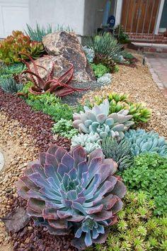 Come creare un giardino roccioso con diversi tipi di piante grasse.