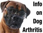 Some key points on dog arthritis.  It's important to know if your dog needs a glucosamine supplement for osteoarthritis or has another condition that a Veterinarian needs to diagnose.