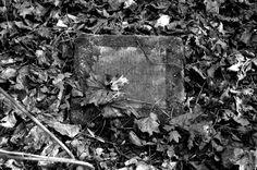 Friedhof Lindener Berg (85)
