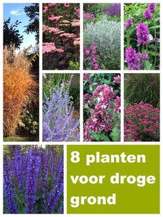 Plants for dry soil, Backyard Plan, Backyard Greenhouse, Dry Garden, Love Garden, Sensory Garden, Plant Species, White Gardens, Garden Cottage, Small Trees
