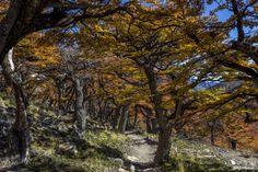 Autumn in Patagonia by Bob Machado on 500px