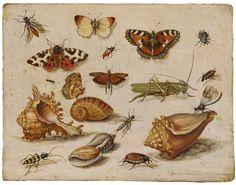 Jan van Kessel  1659 http://www.lempertz-online.de/gldet.asp?v=k1026400009870127500001&mkat=&mablos=&msb=&martist=