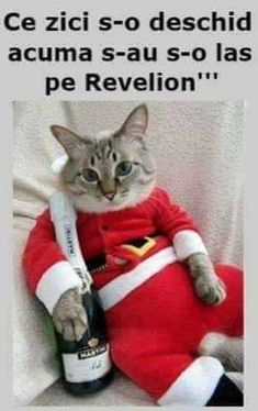 Anul Nou, Good Jokes, Comedy, Cats, Funny, Gatos, Funny Parenting, Comedy Theater, Cat