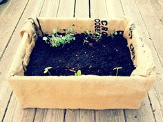 container veggies! adventures in urban farming!