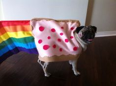 <b>Halloween was MADE for pugs.</b>