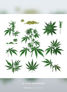 Leaf Illustration, Engraving Illustration, Cannabis Plant, Green Leaf Background, Background Patterns, Weed Buds, Cosmetic Bottles, Leaves Vector