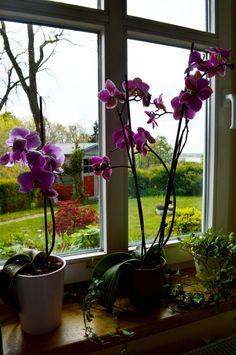 """#Blumen im Wohnzimmer der #Ferienwohnung """"Zum alten Pfau"""" im #Ostseebad #Goehren auf der #Insel #Ruegen Plants, Peacock, Island, Living Room, Flowers, Plant, Planets"""
