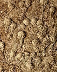 Crinoids (Uintacrinus socialis), also known as sea lilies or feather-stars, are marine animals from the Cretaceous age, 144 to 65 million years ago. These crinoid fossils are embedded in a limestone matrix.